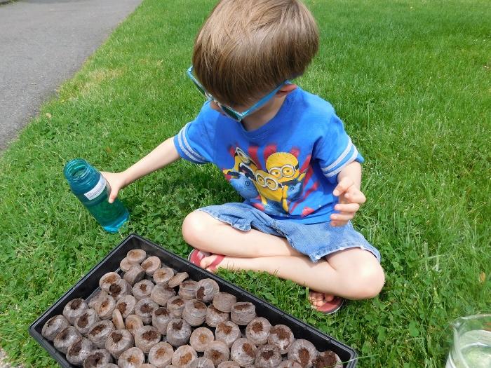 Seeds_Pellet_Watering