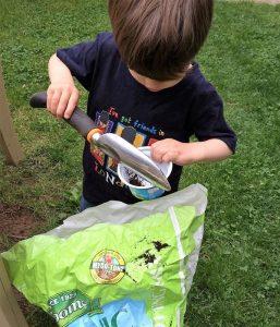 Seeds_Transplanting1
