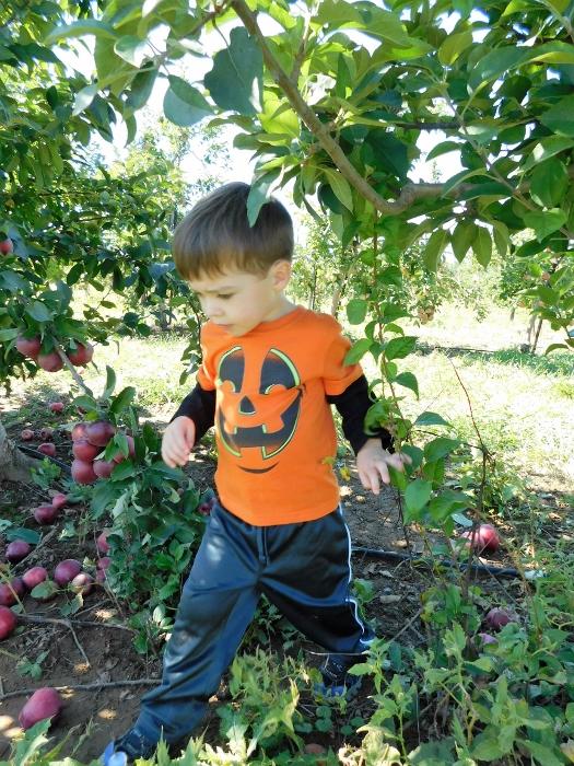 pumpkin_apple
