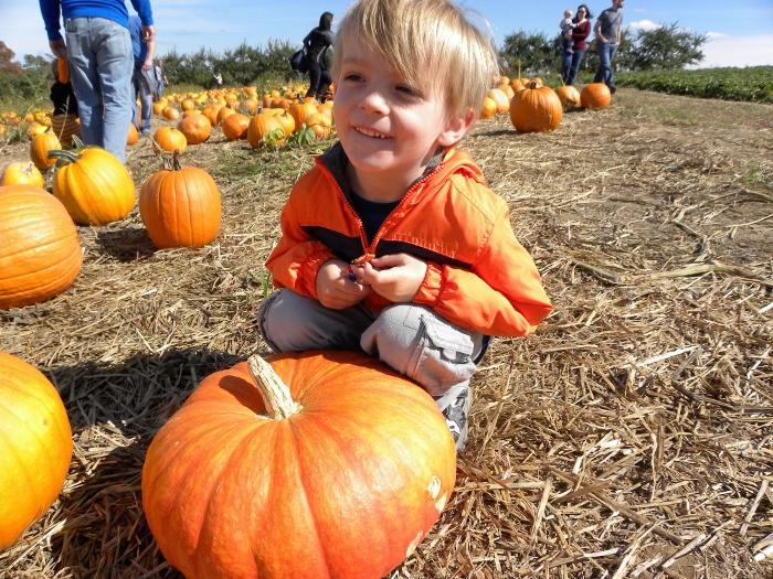 pumpkin_verybest