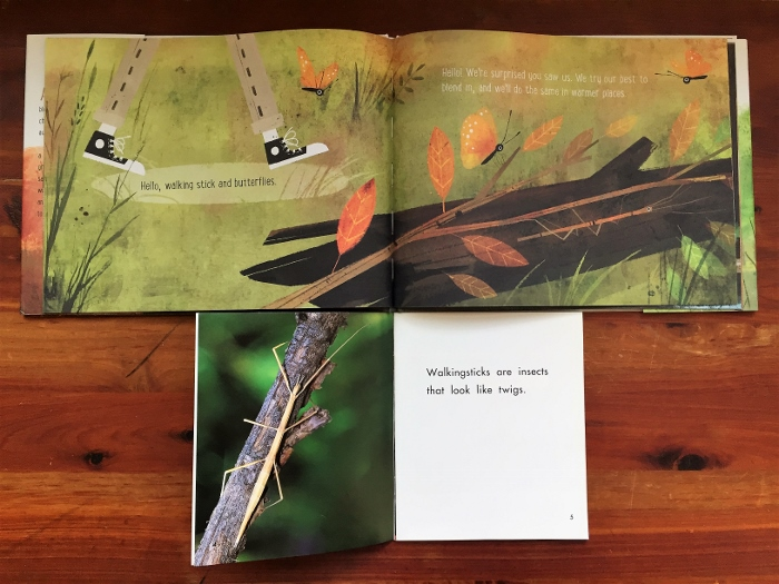 We chose an informational text about walking sticks, a type of insect we found interesting in an illustration from Goodbye Summer, Hello Autumn.