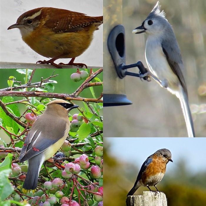 ReadingEveryDay_Birding_10